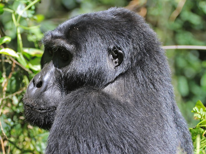 Uganda Gorilla Trek with Undiscovered Destinations