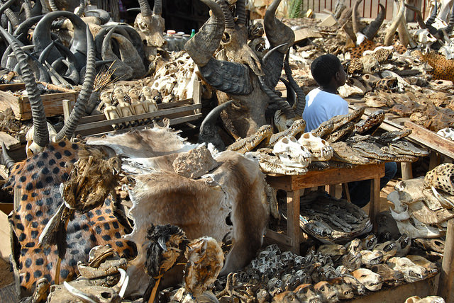 Fetish markets on tours in Togo