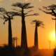 Visit Madagascar and the Boabab Avenue on Wild Madagascar tour