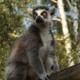 Madagascar Holidays and tours
