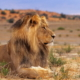 Namibia Tour - Namibia Encompassed