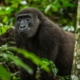 Holidays and tours in Republic of Congo