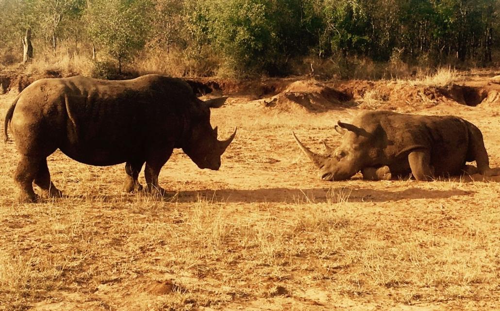 Rhino at Hlane Royal National Park , Eswatini