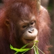 Holidays and tours in Borneo