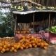 Sri Lanka Food Tour