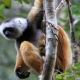 Madagascascan wildlife Holiday