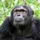 Tours and Holidays | Uganda Safari